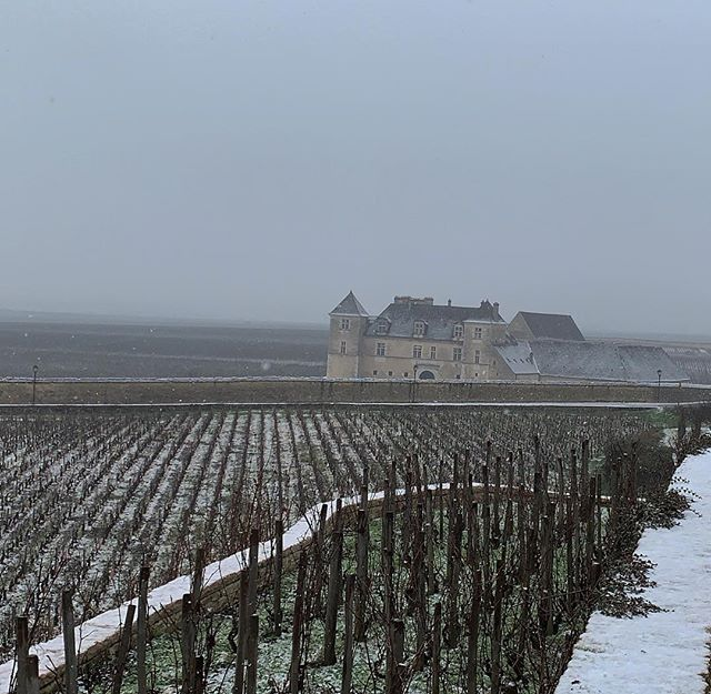 ❄️ #domainefelettig #felettig #closvougeot #burgundy #snow #winter #wine #vines #vine #vineyard #vinestagram #frenchwine #winestagram