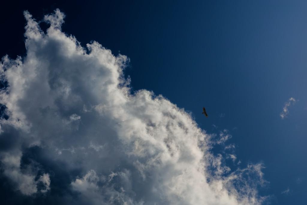 A buzzard flies alone under a big cloud in a blue sky