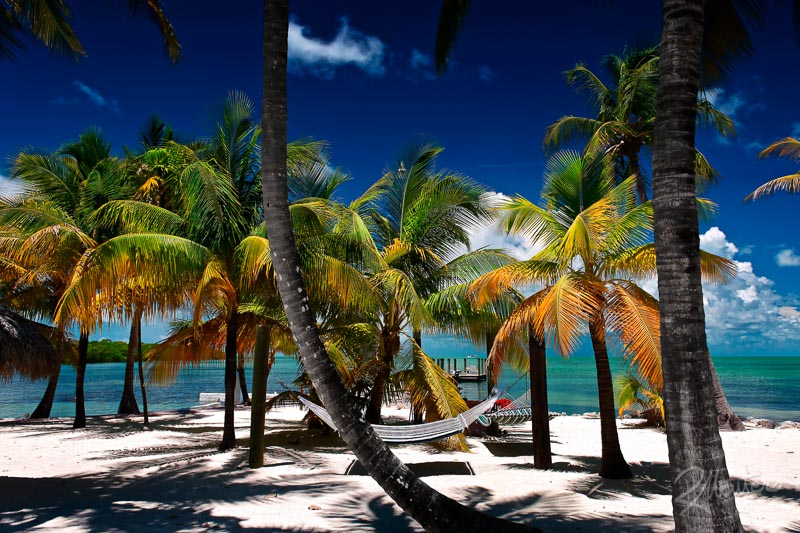caribbean relaxing scenario with palms, blue sky, sun, white sand and green sea