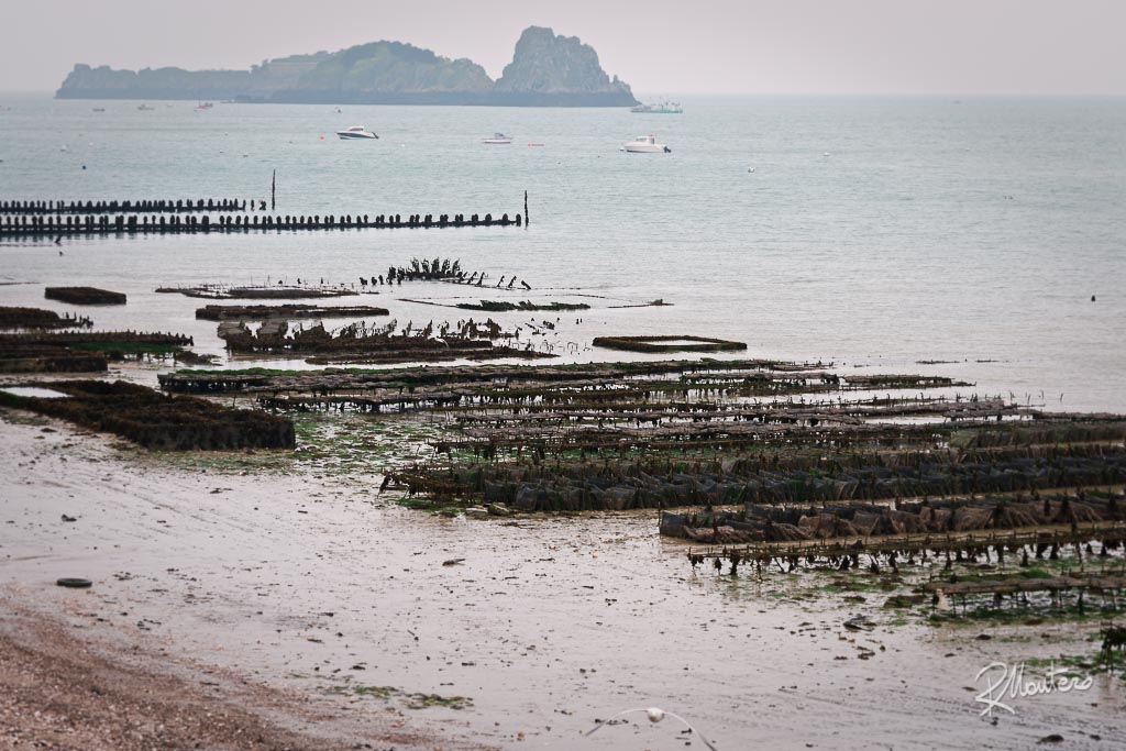Oyster beds in the sea