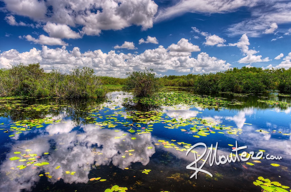 A blue cloudy Sky reflects in a small swamp pond
