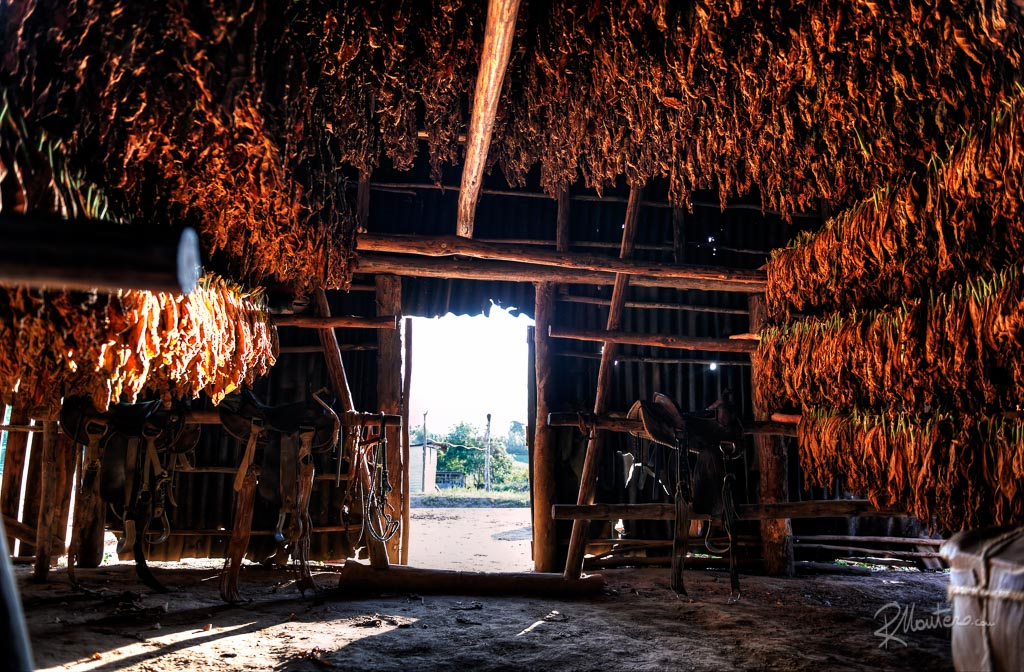 This is the place where the tobacco leaves are dried to become the most fine cigars in the world, the Puros.