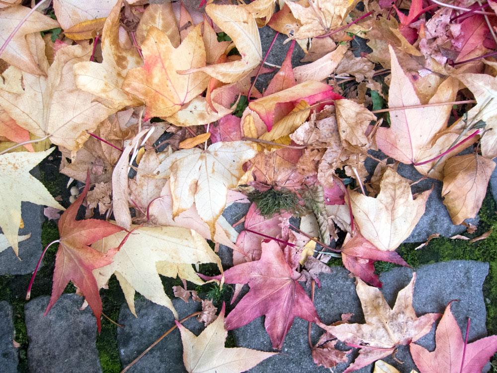 2017_10_04_leaves.jpg