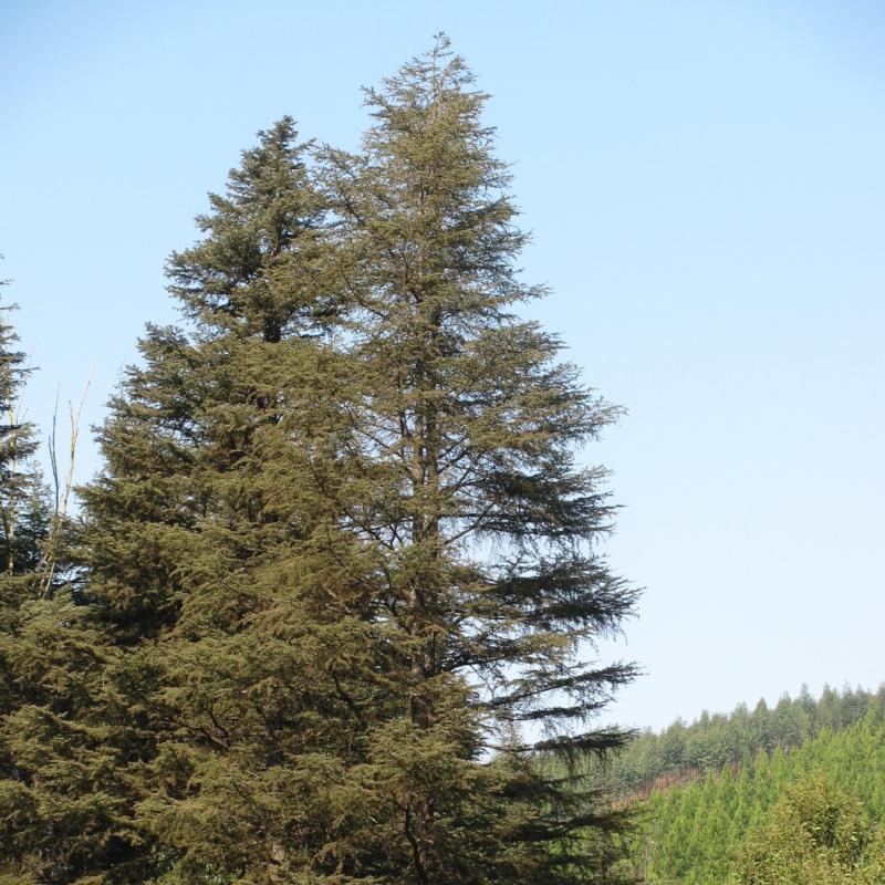 Surejoy Industries Forestry.jpg