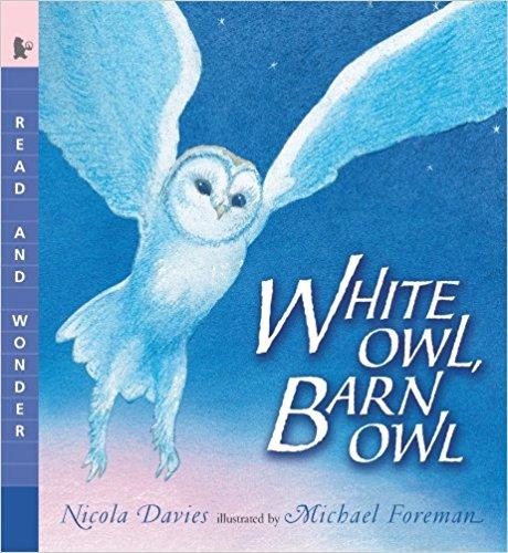 White Owl, Barn Owl.jpg
