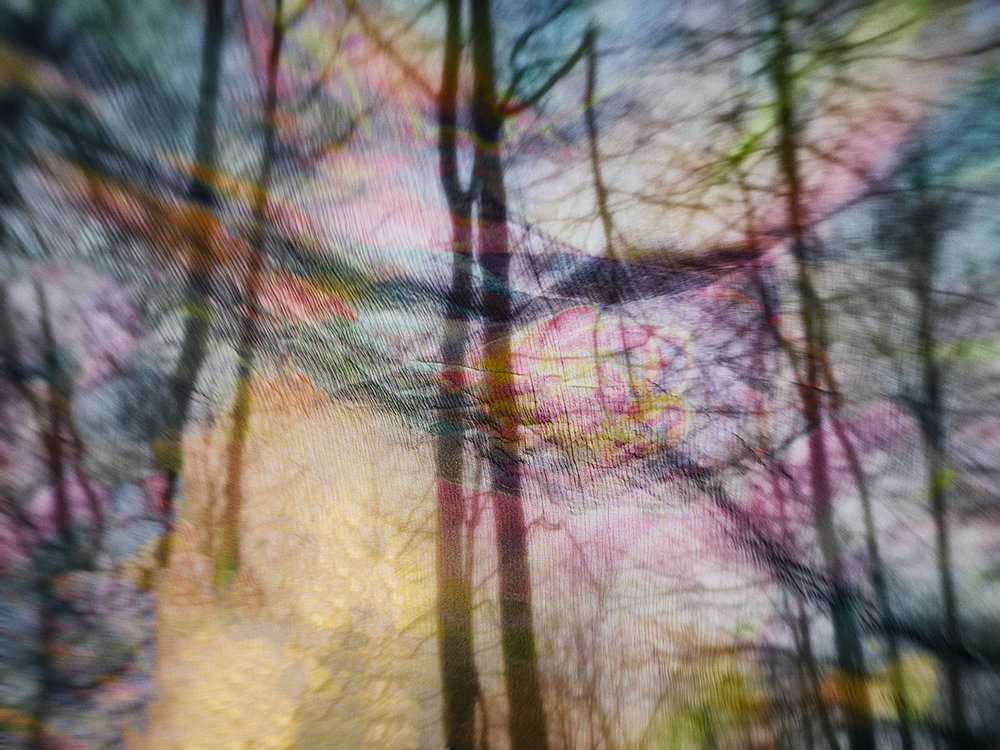 Veiled Trees ©2018 Eileen Lerner