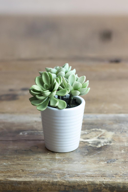 Cute, little, faux succulent plant in a white plant pot.