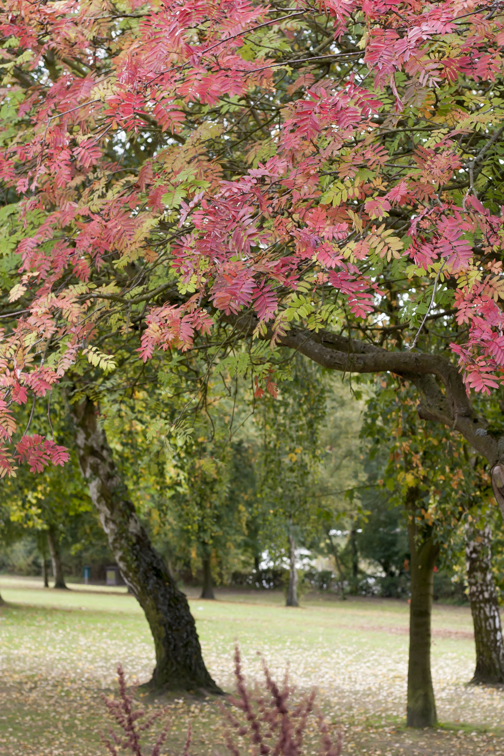Healthy trees with pink and green leaves