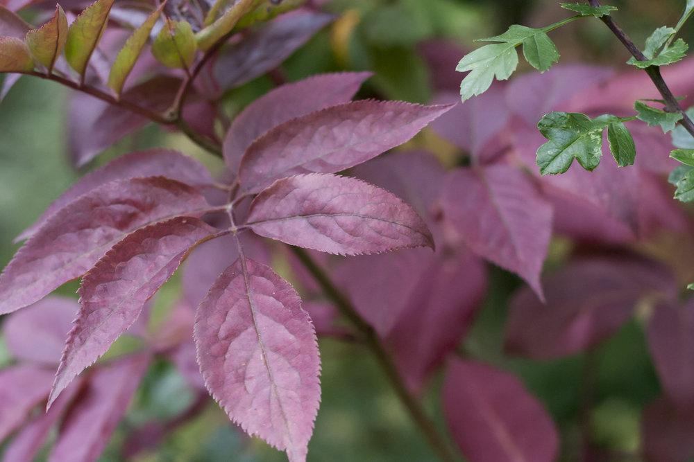 leaves_b.jpg