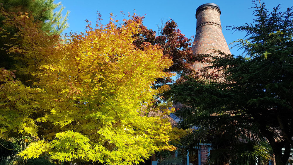 Golden green acer and blue sky with the bottle kiln.