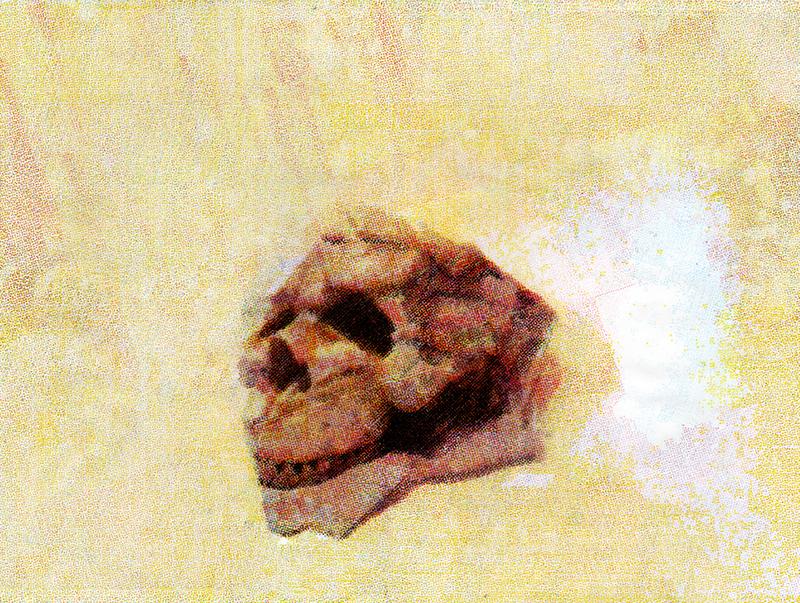 Skull, 2011
