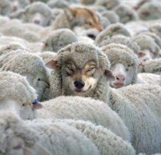 wolf-sheeps-clothing (1).jpg