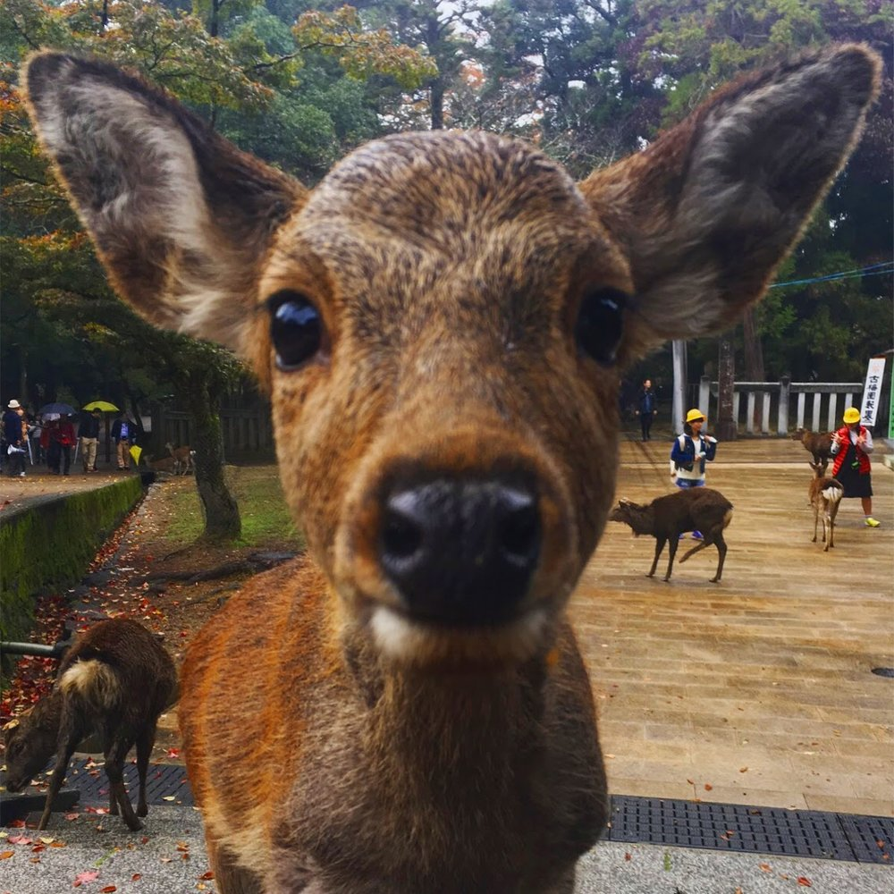 Isn't that baby deer the most adorable creature ever?