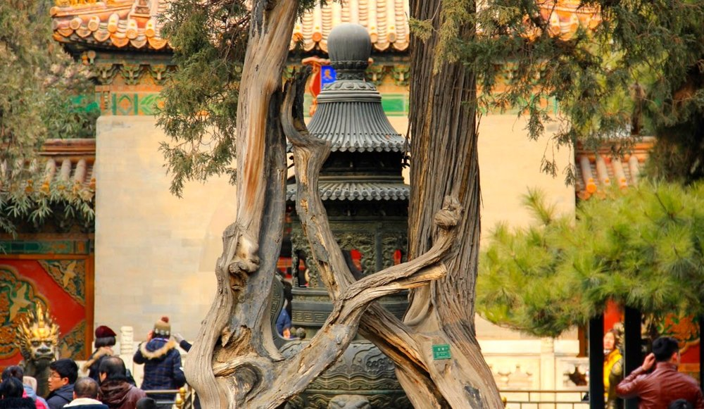 Imperial Gardens is where the Emperor and his Empresses and concubines spent their leisure time.