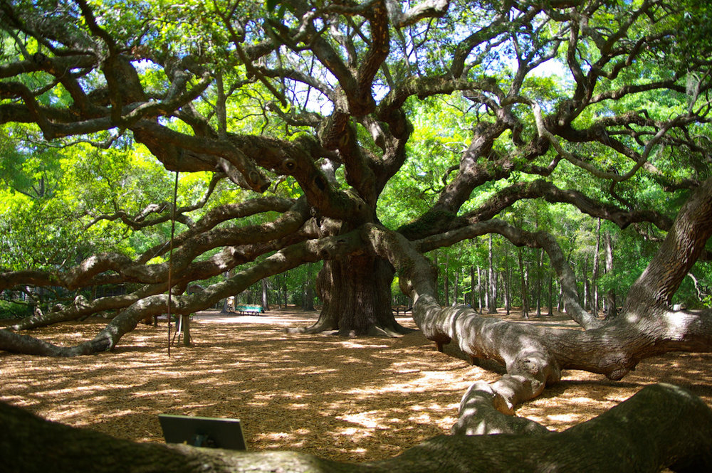angel oak.jpg