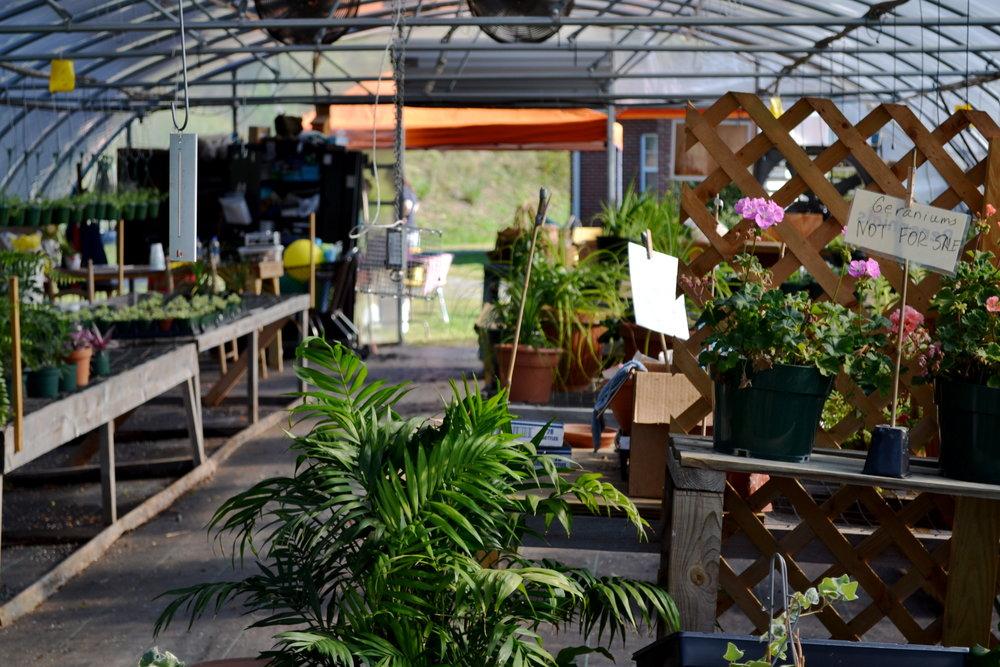Green House3.JPG