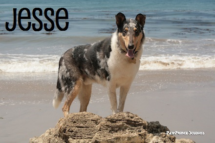 JESSE POSTER DOG..jpg