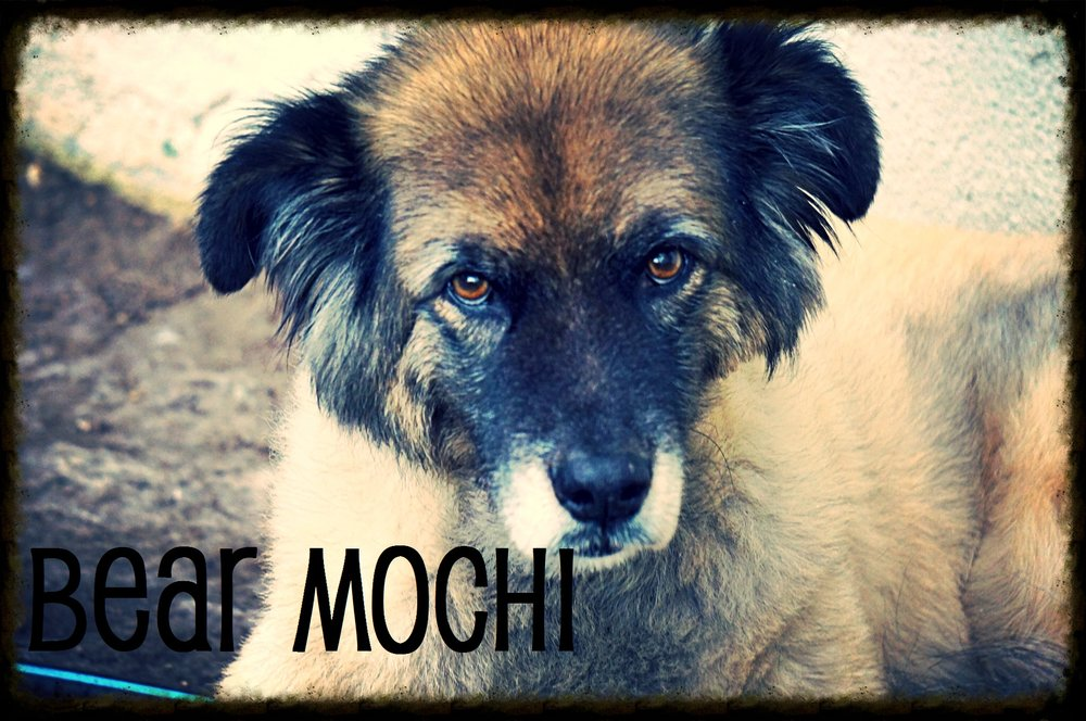 Bear Mochi.jpeg