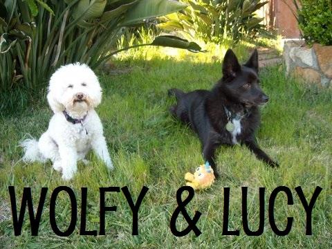 Wolfy & Lucy.jpg