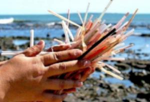 plastic straws on beach.jpg