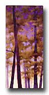 PURPLE WOOD II Image: 24 x 12 Paper: 24 x 12