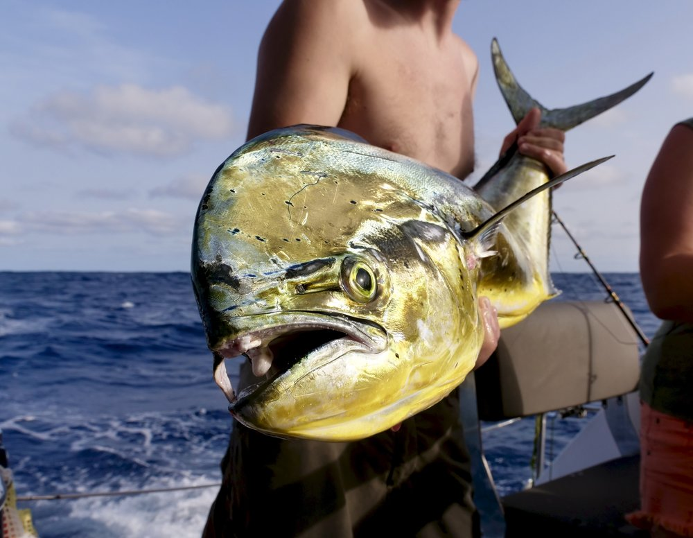 fishupclose