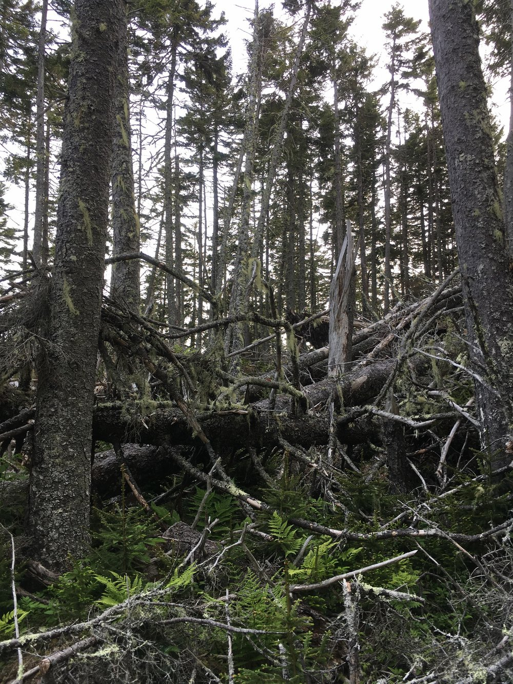jumbled.forest.JPG