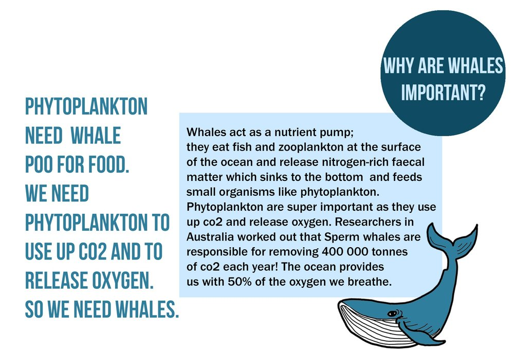 smartsquid+whales