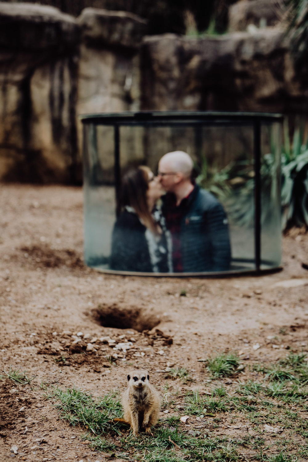 emily and daniel nashville zoo engagement session wilde company-7689.jpg