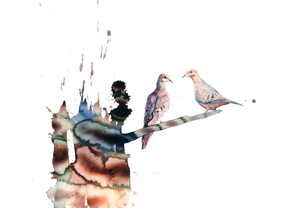 """Mourning Dove,"" 25.5 x 37.75,"" watercolor on paper, SOLD"