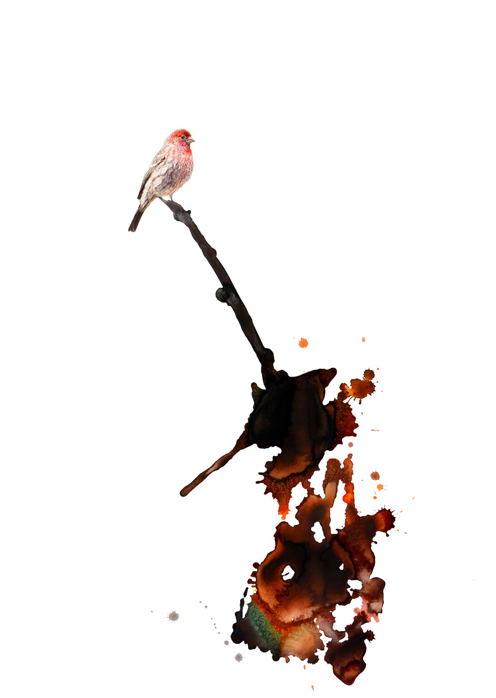 """House Finch,"" 37.75 x 25.5,"" watercolor on paper, SOLD"