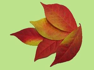 Leaves-1-3.jpg