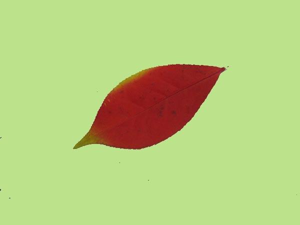 Leaves-6-6.jpg