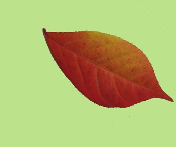 Leaves-7a-6.jpg