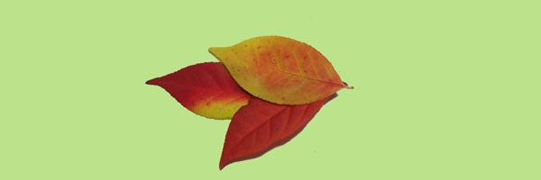 leaves6x2.jpg
