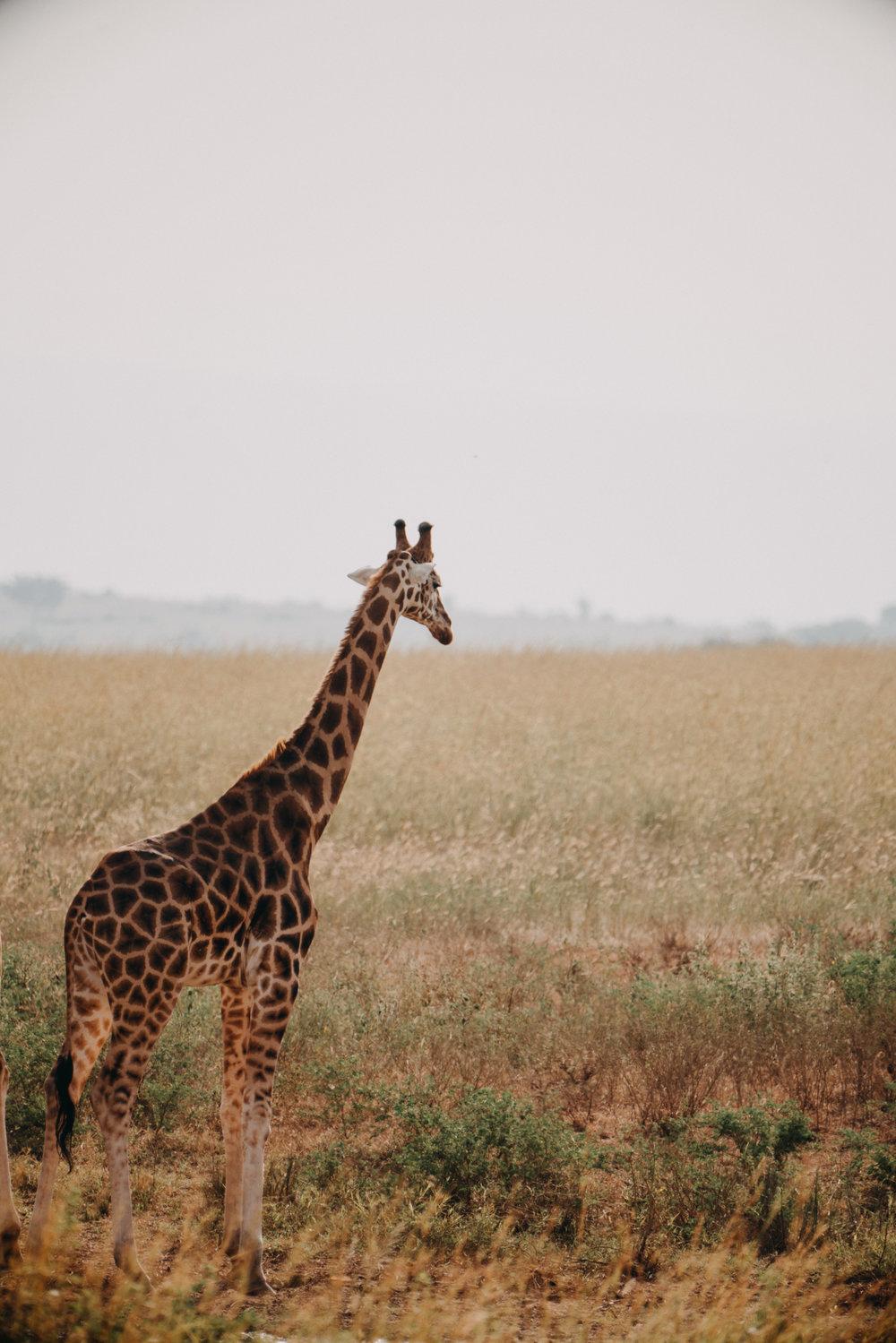 uganda july 2018-245.jpg