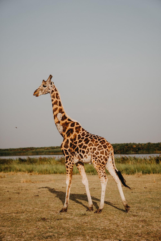 uganda july 2018-260.jpg