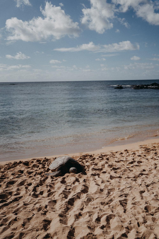 hawaii-80.jpg