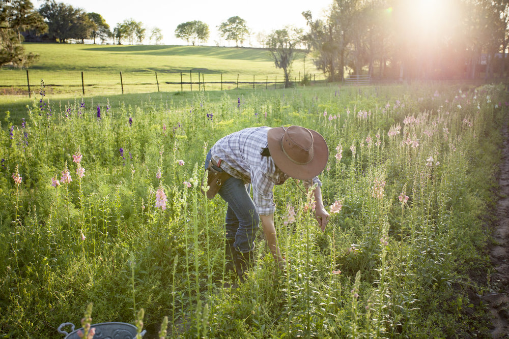 flower farmer field
