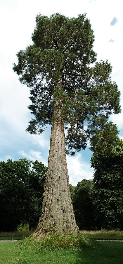 Like a mighty oak. (I may be embellishing)