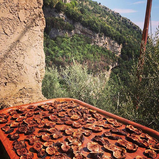 Fichi! #conventosandomenico #sentierodeglidei #pathofthegods #amalficoast #praiano #napoli #naples #figs #italia #italy #siitalia