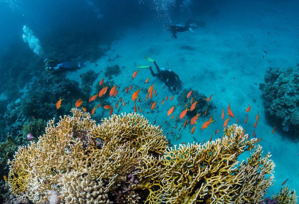 Here i've used a fire coral with an orange Anthias topping, in the foreground of the shot to lead the eye into the frame, shot using just the available light, and showing some divers exploring a reef.