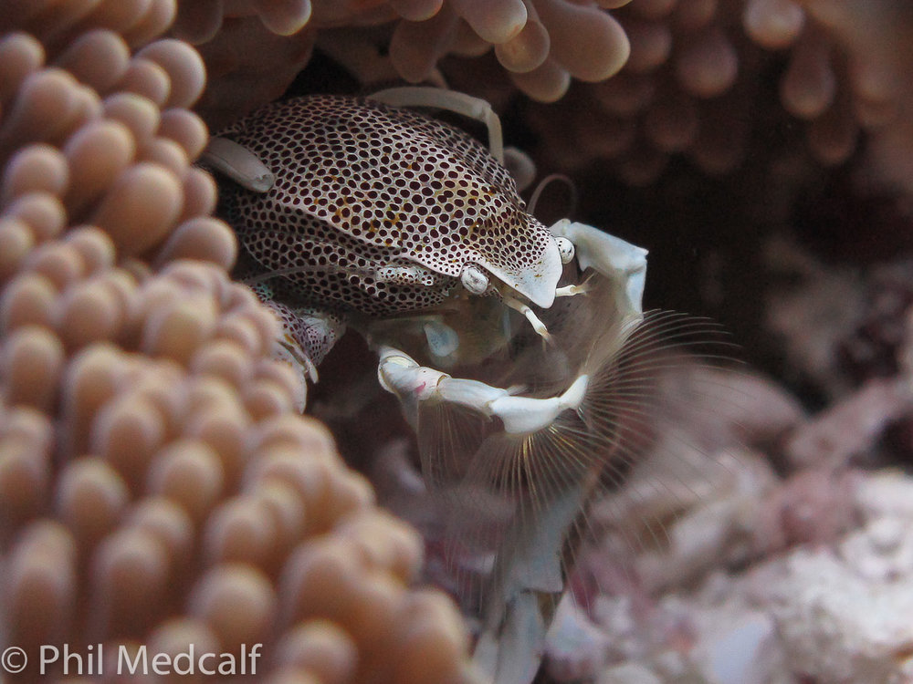 Taking underwater pictures with a compact camera using available light is a budget friendly way of getting started. Adding a filter can be helpful in getting better colours in your pictures