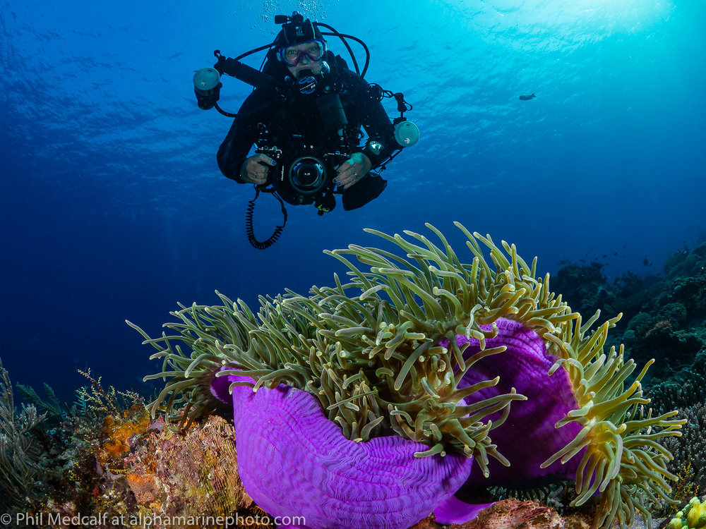 Here's Anne with her Olympus OMD EM10 MkII in a Nauticam housing. The lens she is using is an Olympus 8mm Fisheye which only needs quite a small dome port when used underwater. Non-fisheye lenses (rectilinear lenses) need larger dome ports. A tip when posing for shots like this, look at your reflection in the photographer's dome to see whether you are in the right position.