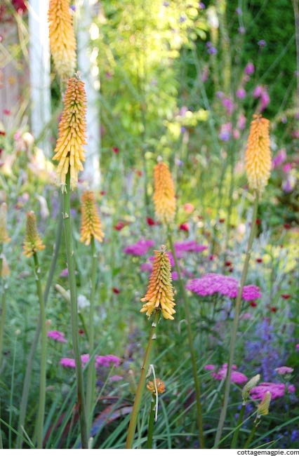 Late Summer Flowers in the Butterfly Garden