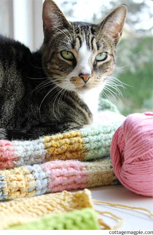 Kitty on a Blanket via cottagemagpie.com