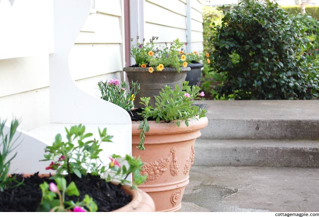 Summer Containers for the Front Garden via Cottage Magpie