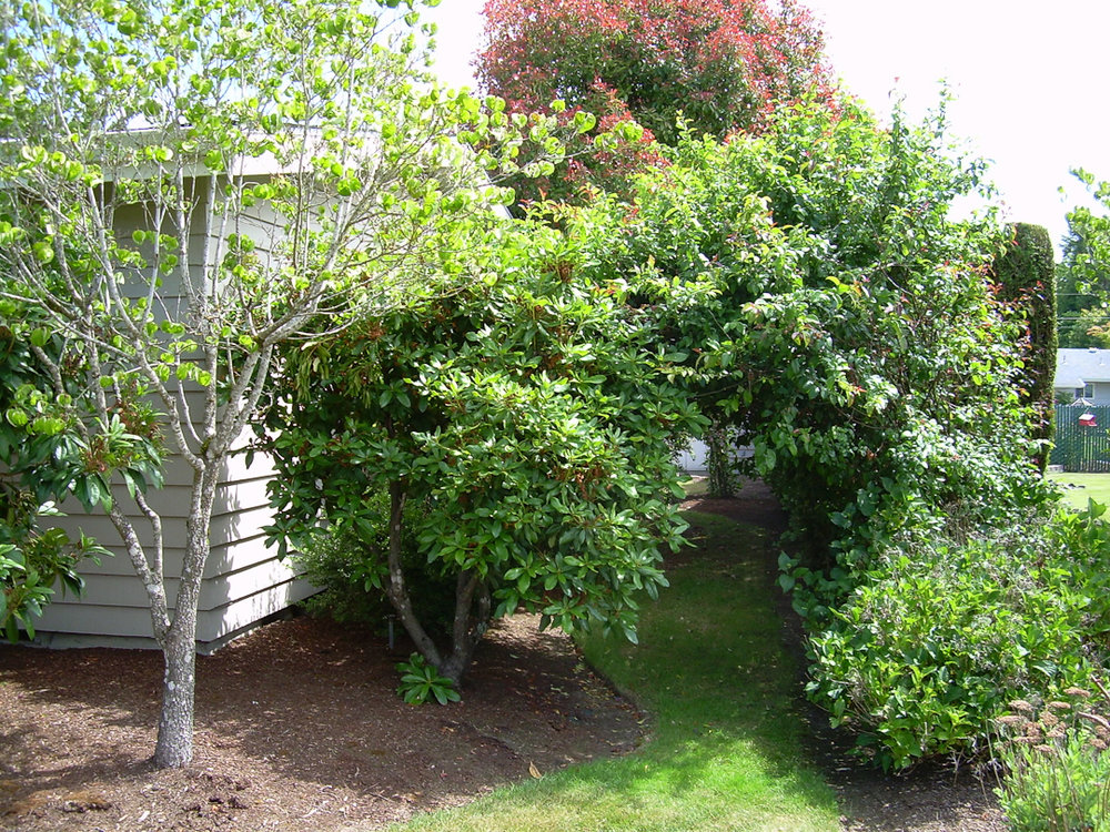Pear Tree Cottage - Garden Before - via www.cottagemagpie.com