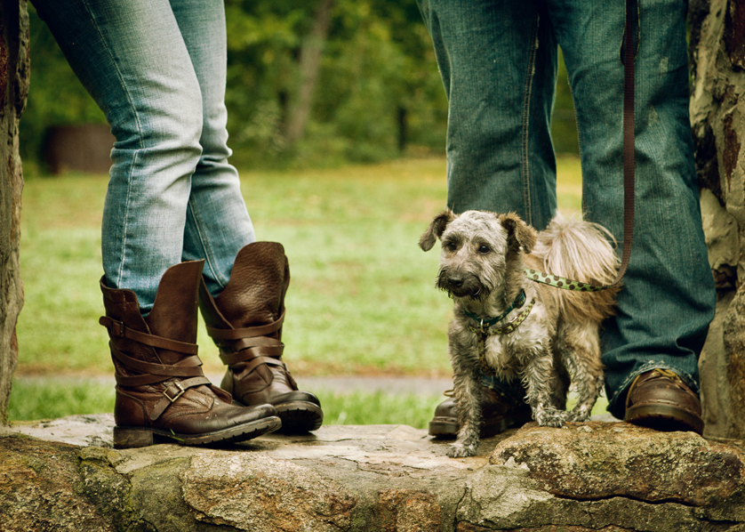 Little dog on stone wall by cowboy boots and jeans