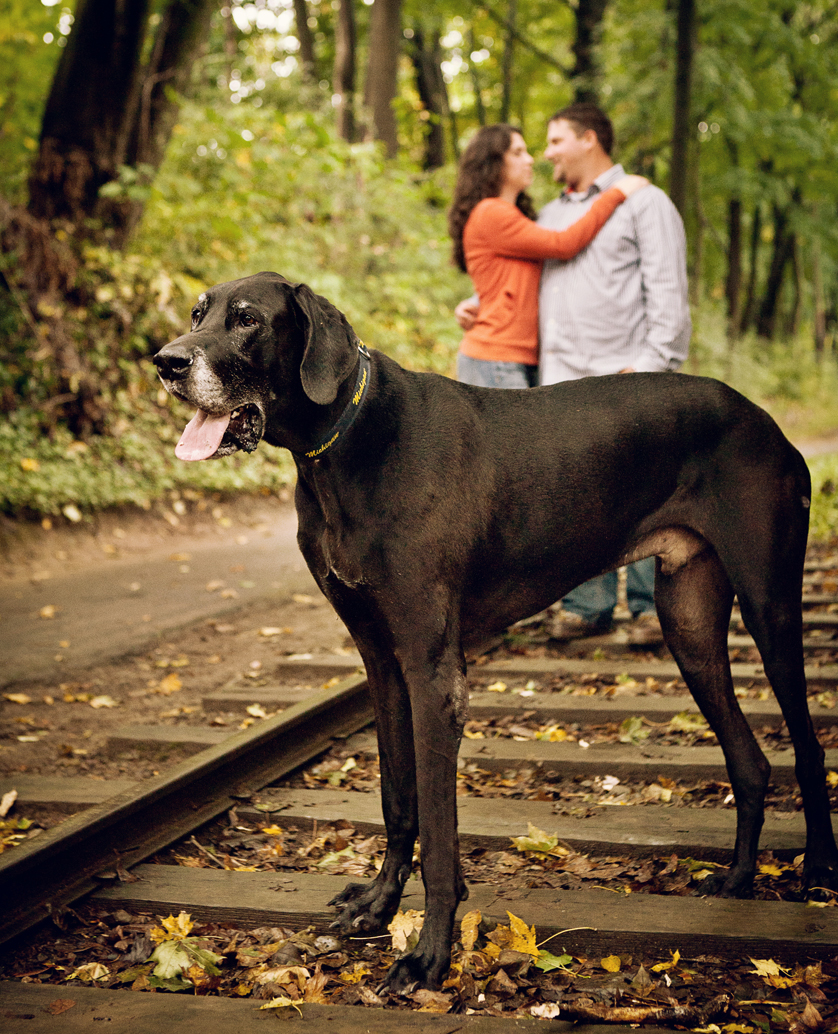 Great Dane in front of couple on railroad tracks